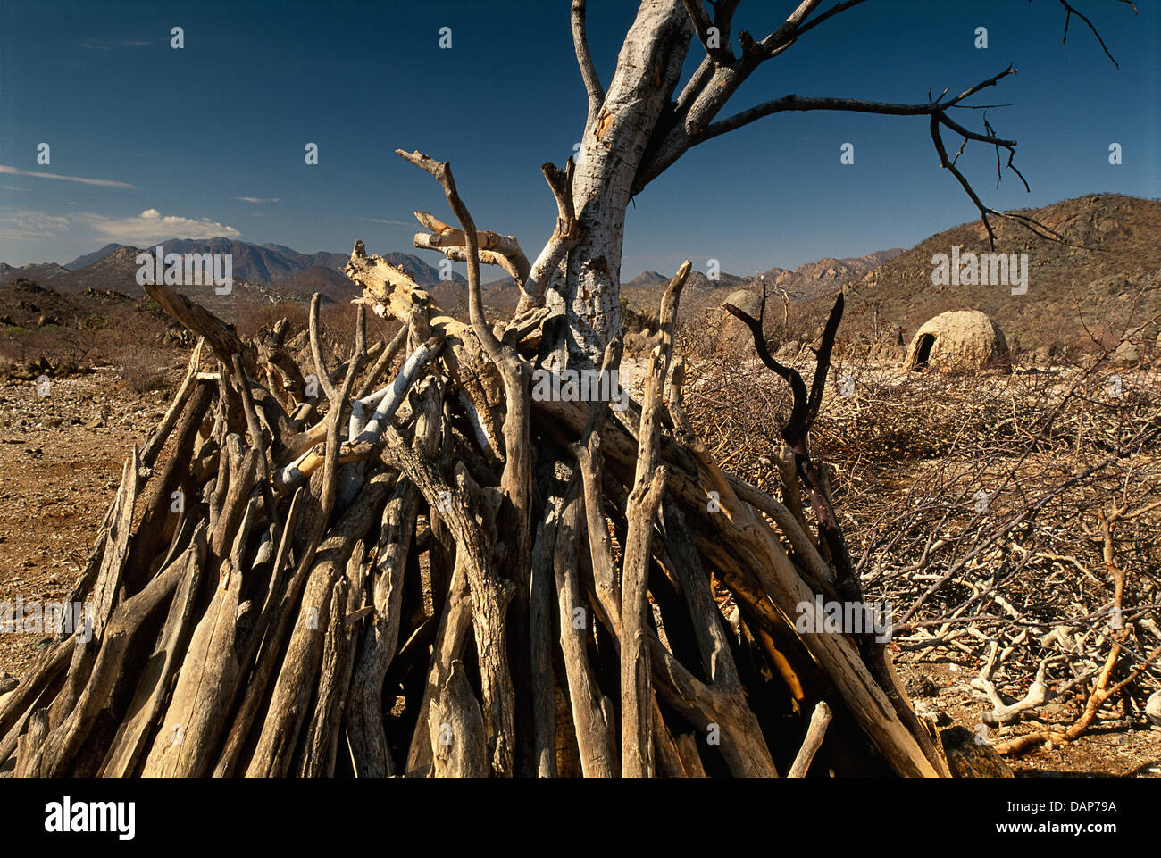 Stacked branches of Himba hut in Angola. Stock Photo