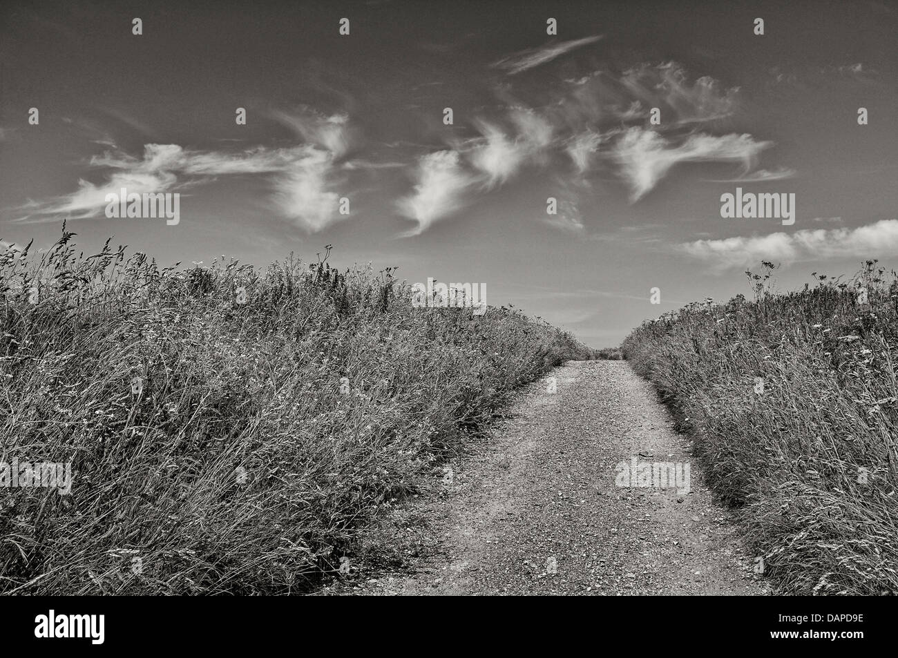 An empty path in Cornwall - Stock Image