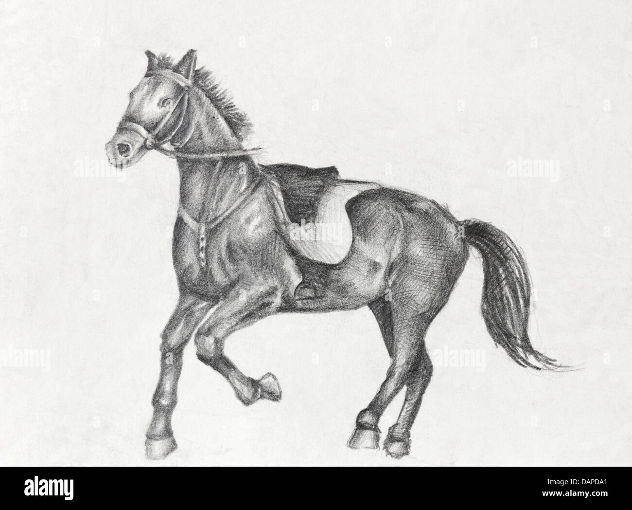 Horse Sketch High Resolution Stock Photography And Images Alamy