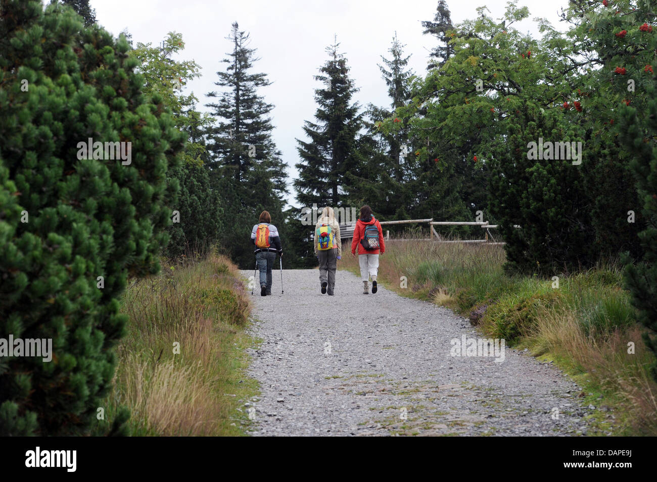 Hikers march along a forest path through the Bannwald in the northern Black Forest region near Seebach, Germany, Stock Photo