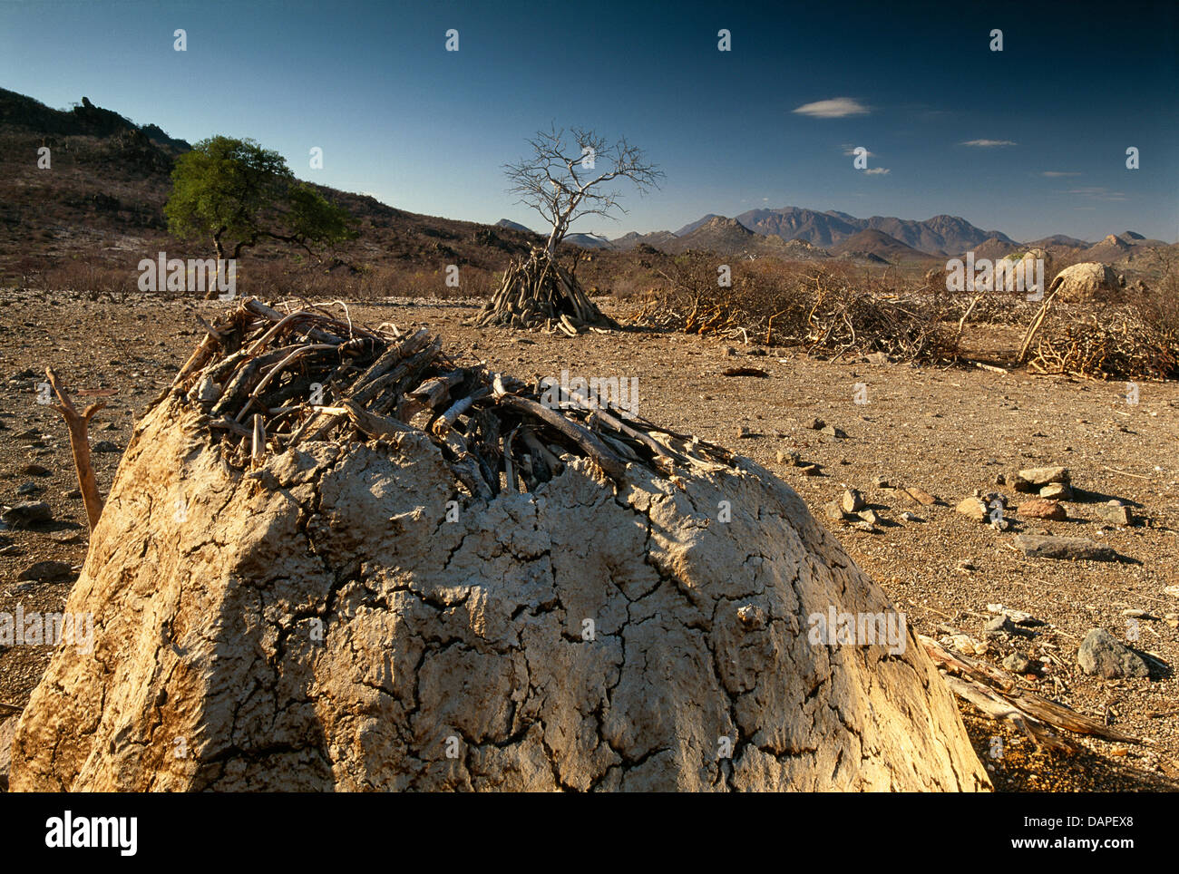 A himba kraal in Angola. Stock Photo