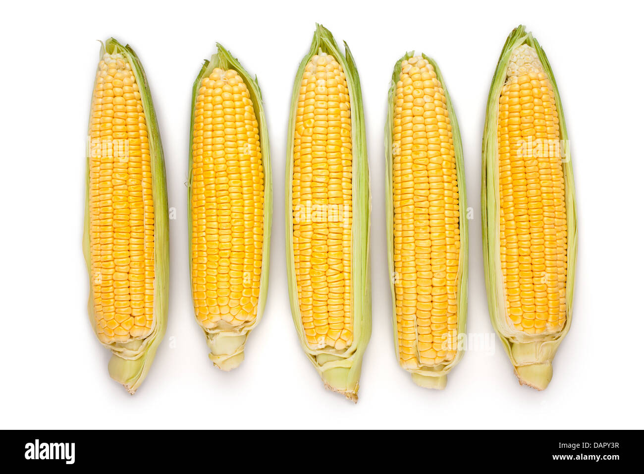 corn ear group on white background - Stock Image