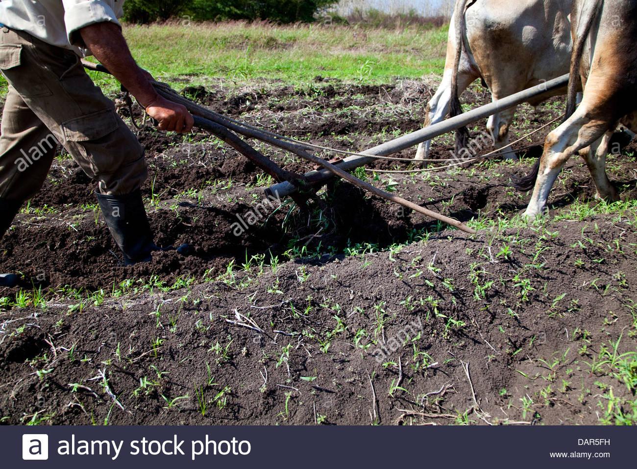 Cooperative Farmer Stock Photos & Cooperative Farmer Stock
