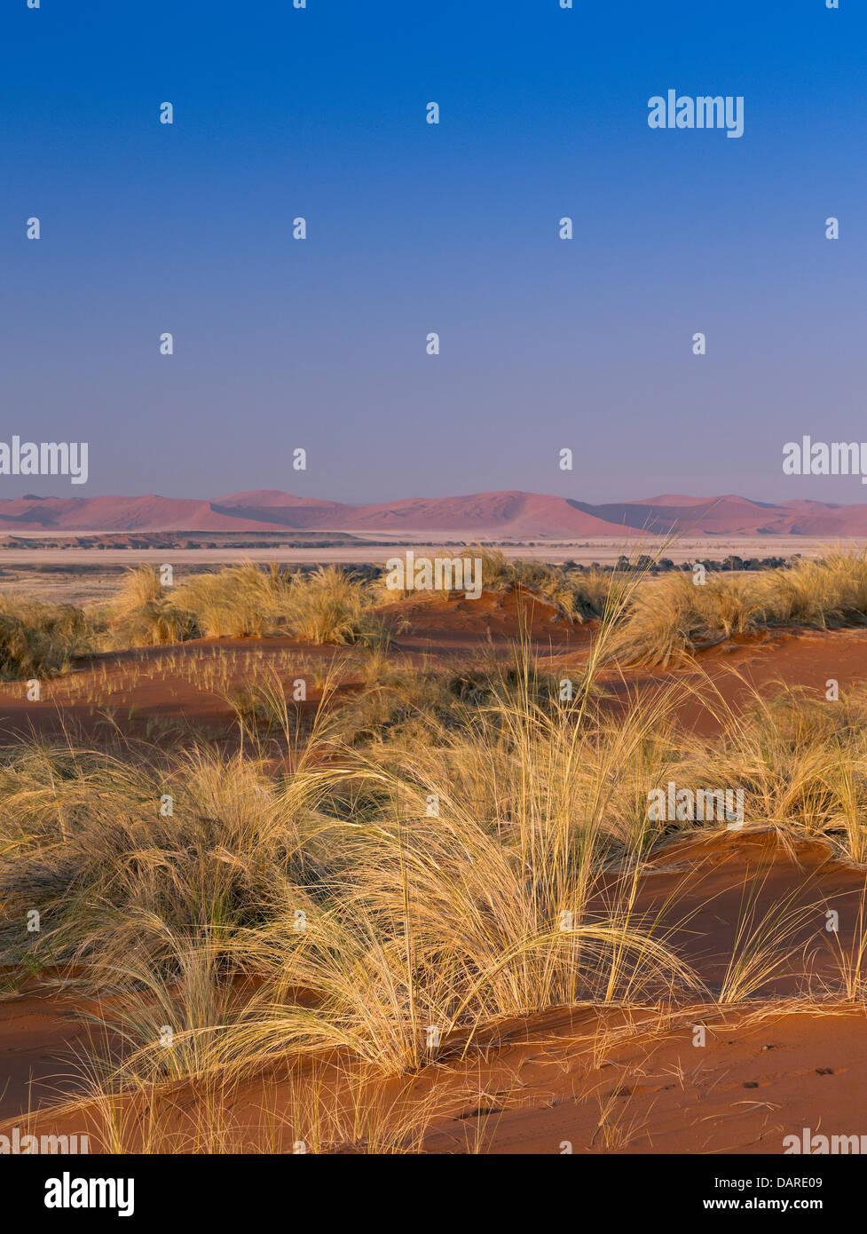 Desert grasses, Sossuspoort lookout in the Namib Naukluft Desert Park, Namibia - Stock Image