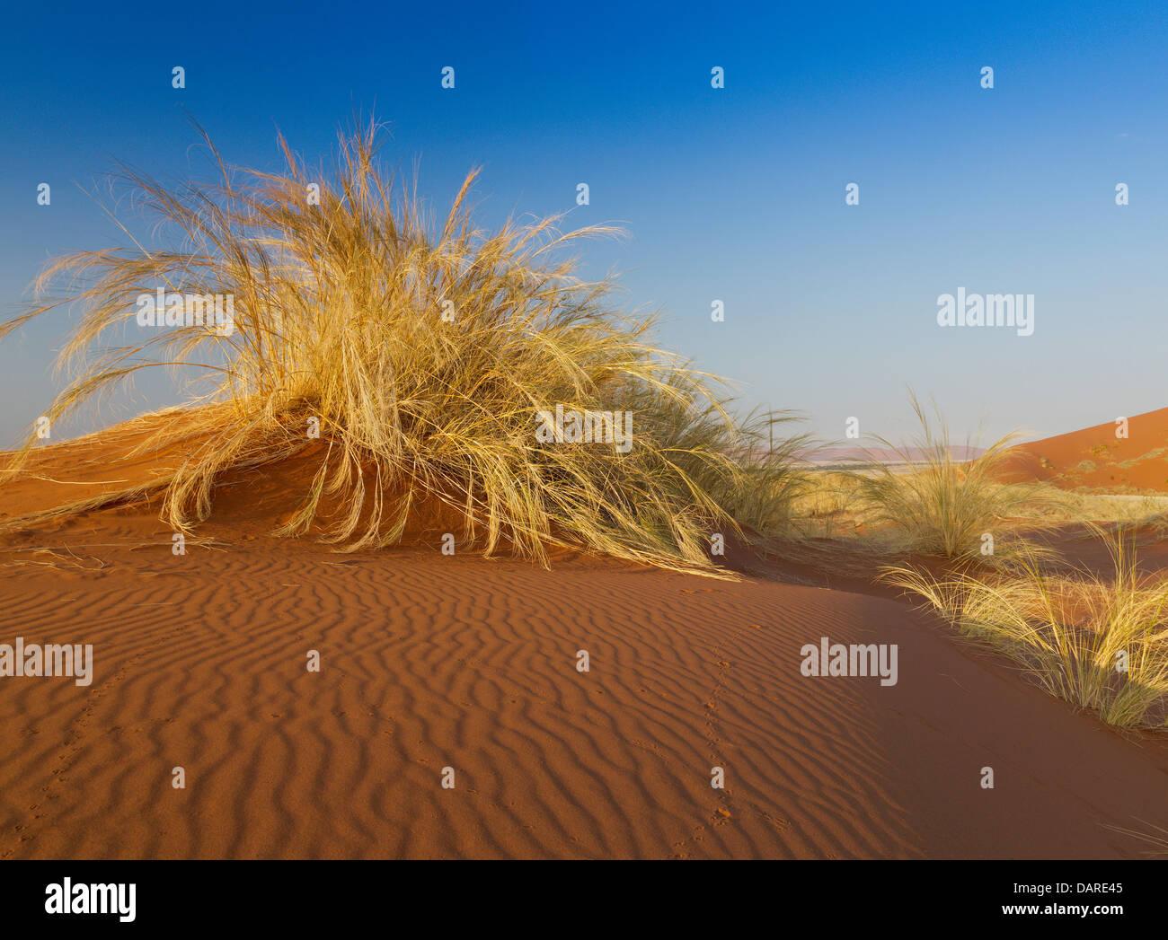 Dune grasses, Sossuspoort lookout in the Namib Naukluft Desert Park, Namibia - Stock Image