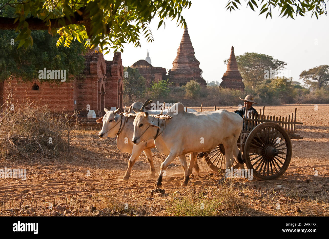 Ox cart and temples on Bagan Plain of Myanmar. - Stock Image