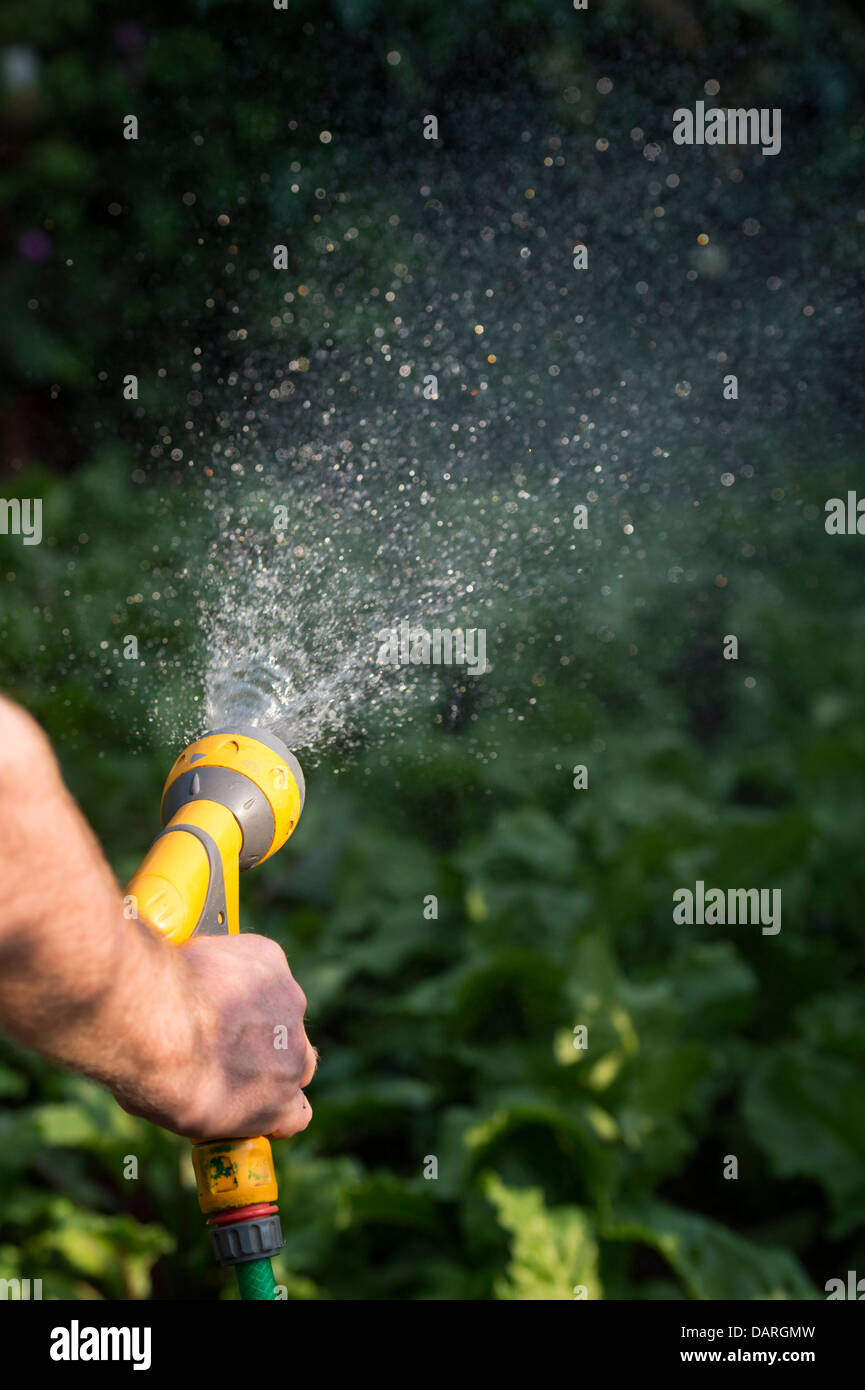 Watering the garden with a hosepipe. England - Stock Image