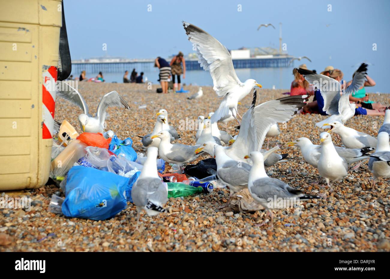 Herring Gulls or seagulls feasting on rubbish by communal bins on Brighton beach UK - Stock Image