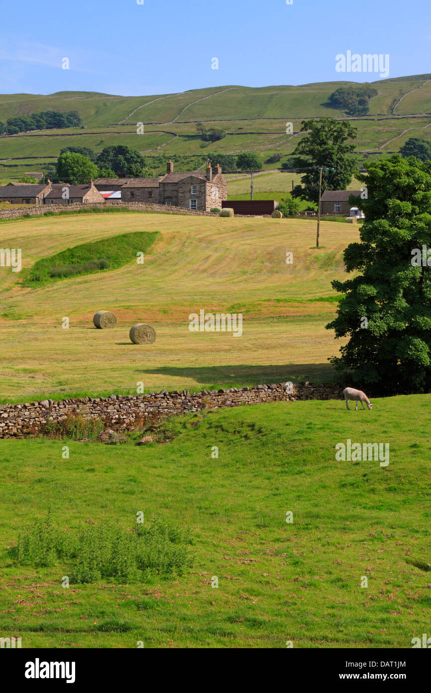 Hay bails in a field near the Pennine Way in Hawes, Wensleydale, North Yorkshire, Yorkshire Dales National Park, - Stock Image