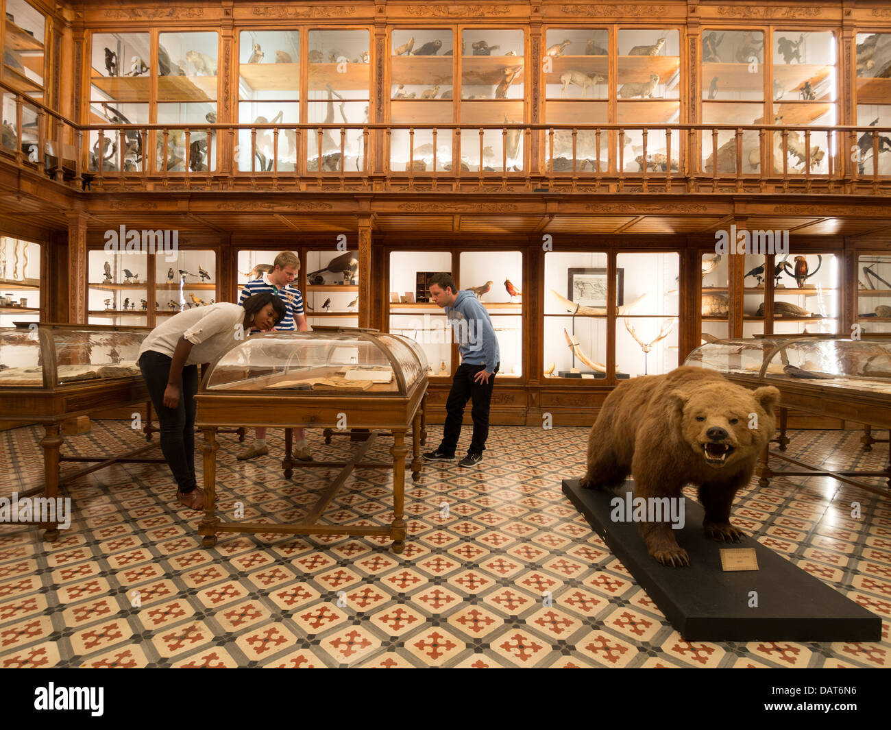 Museu de Zoologia (zoology museum) in Coimbra, Portugal, Europe - Stock Image