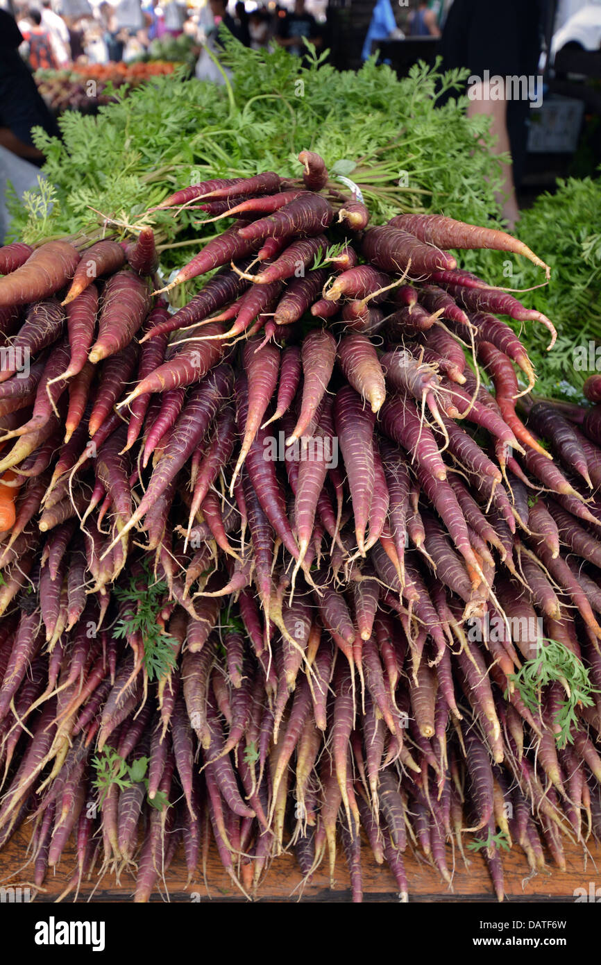Purple carrots for sale at the Union Square green market in Manhattan, New York City - Stock Image