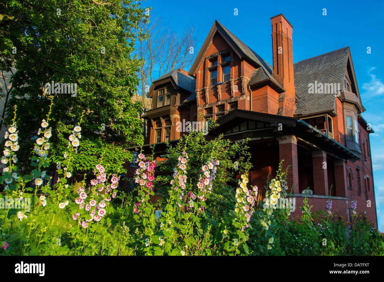 Alcea commonly known as hollyhocks in front of old house in Buffalo New York - Stock Image