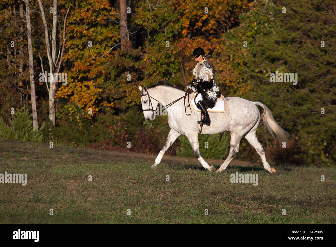 Masked woman in Halloween costume riding gray horse in countryside - Stock Image