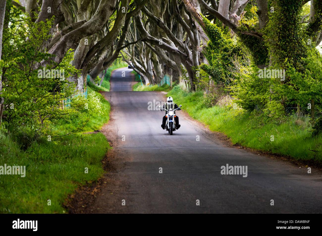 Motorcycle travels through the Dark Hedges, Bregagh Road, Ballymoney, County Antrim, Northern Ireland, UK - Stock Image