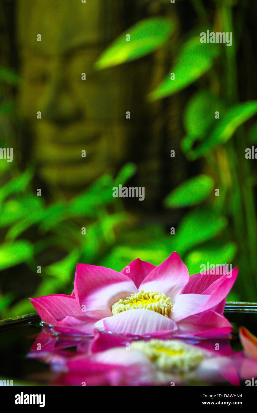 Buddha lotus flower stock photos buddha lotus flower stock images floating lotus blossoms in a pond in siem reap in cambodia with a buddha statue in mightylinksfo