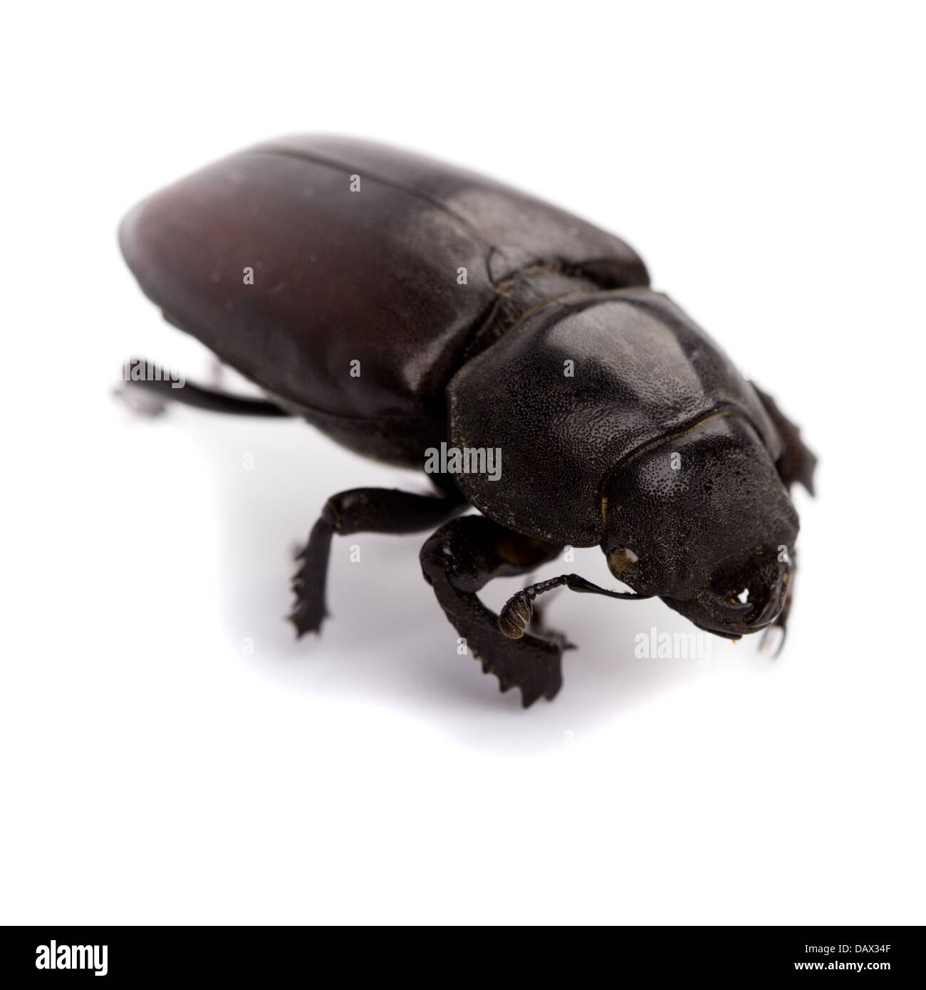 black bug - Stock Image