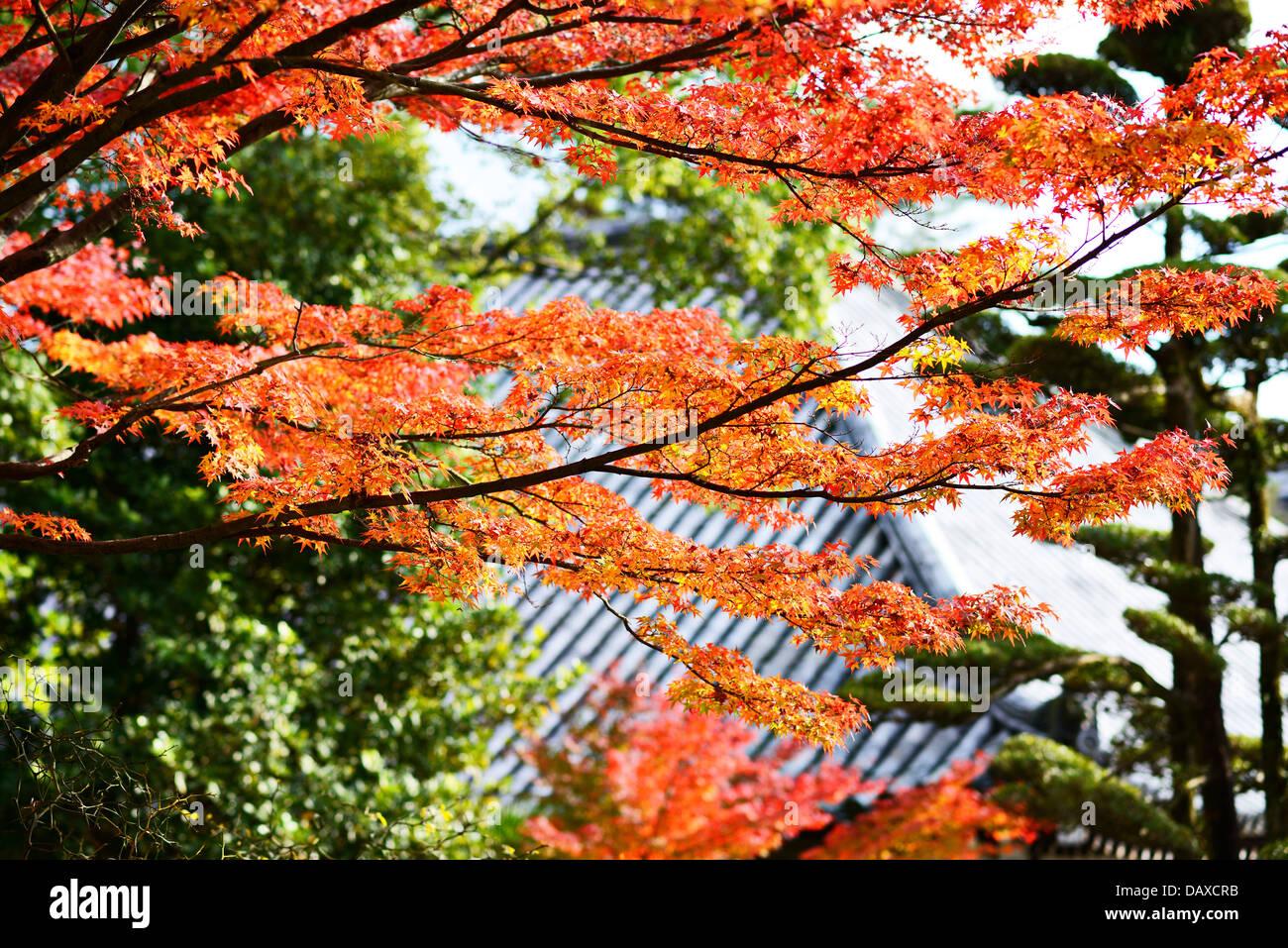 Fall Foliage in Nara, Japan. - Stock Image