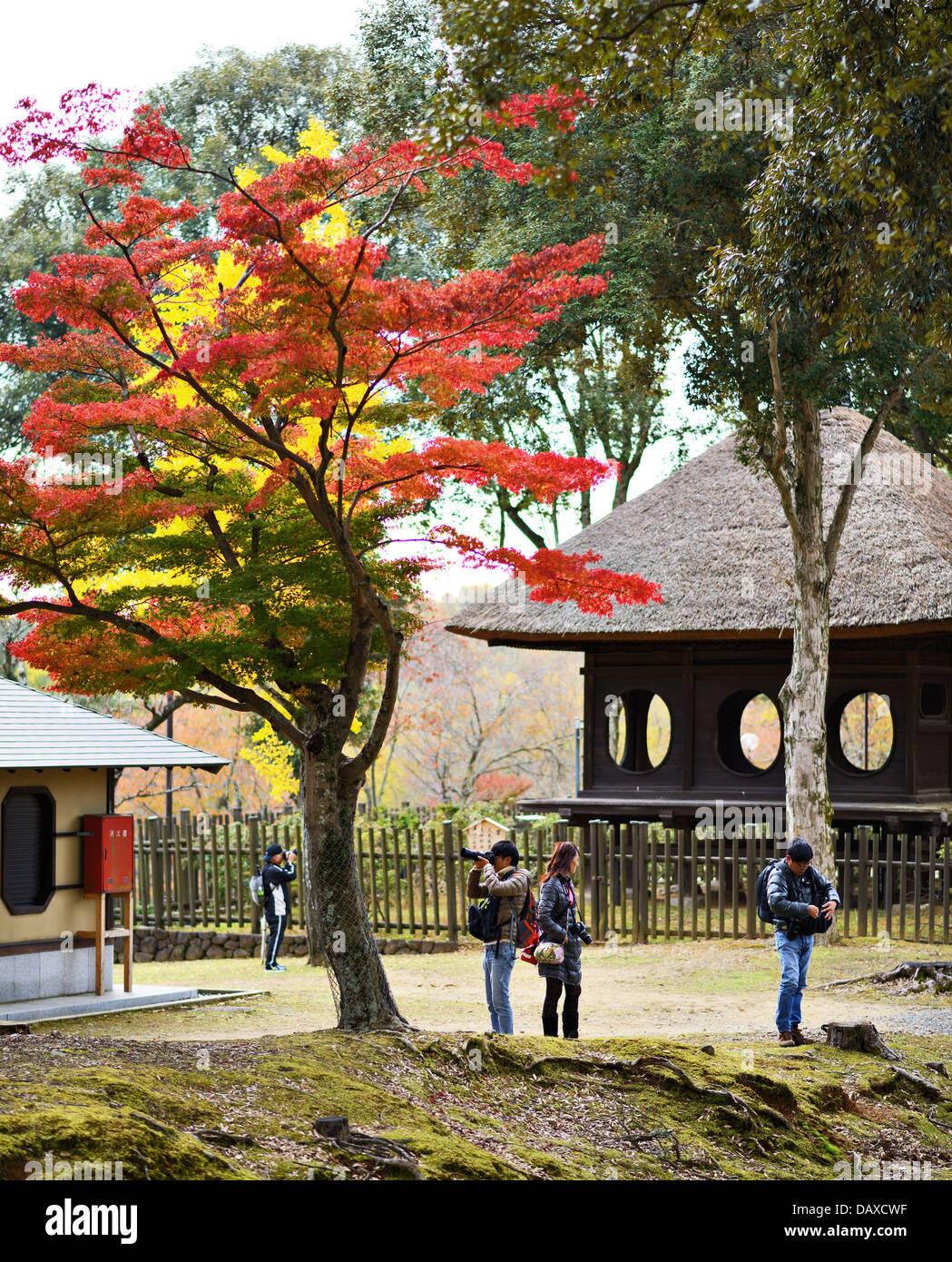 Photographers under fall foliage in Nara, Japan. - Stock Image