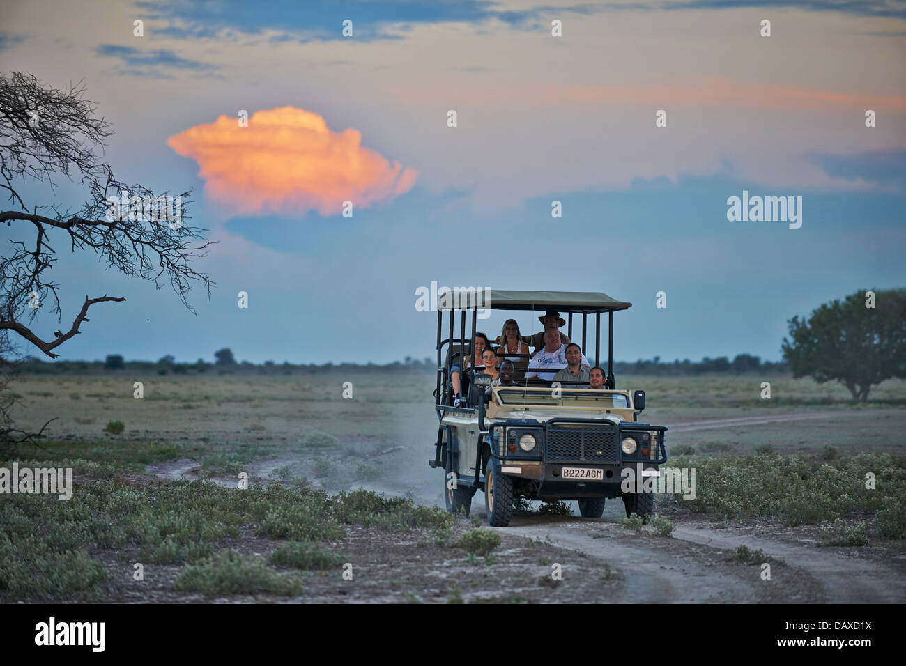 4x4 safari car with tourists and guide during sunset in Central Kalahari Game Reserve, Botswana, Africa - Stock Image