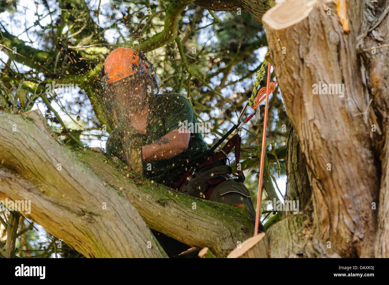 A tree surgeon uses a chainsaw to cut branches from a tree Stock Photo