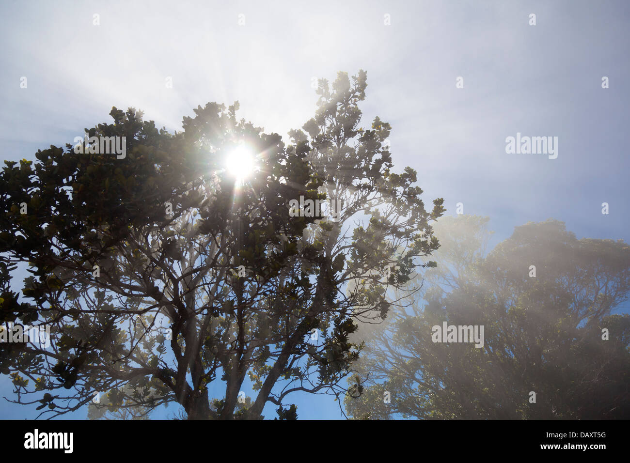 Sun shining through a tree with a bit of mist. - Stock Image