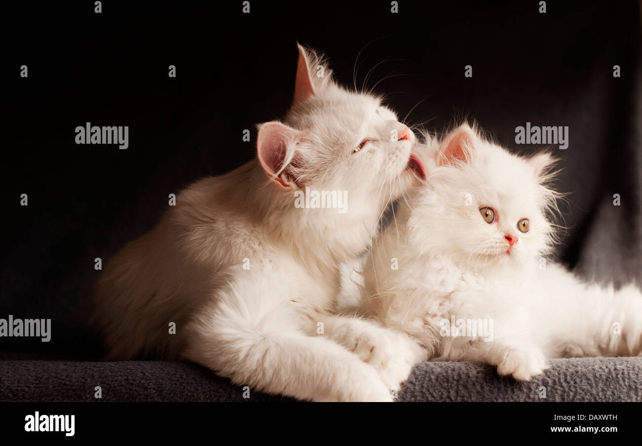 Cat family - Stock Image