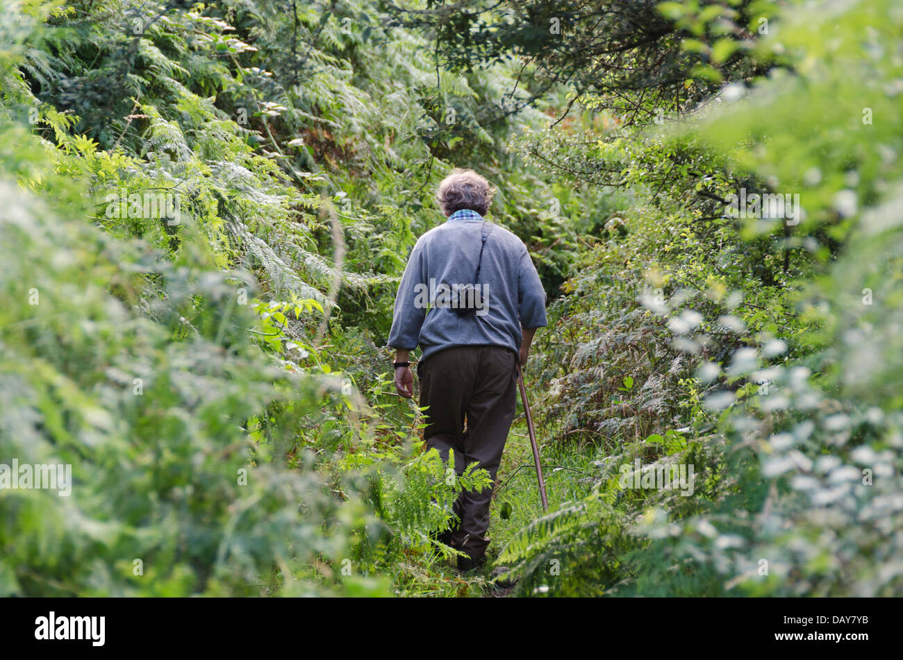 Elderly man with camera walking along a countryside footpath - Stock Image