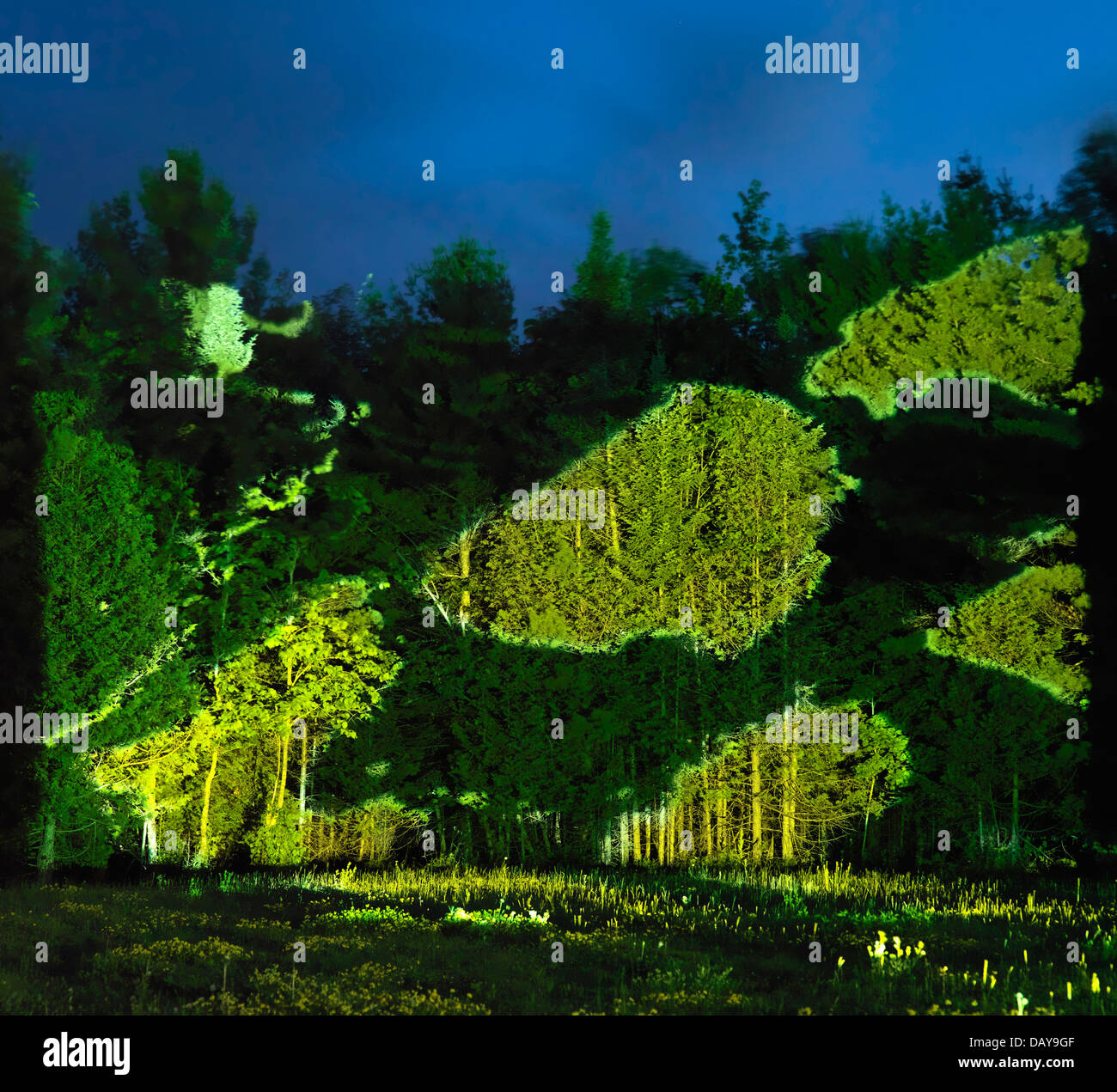 Abstract light projection on green trees and grass, beautiful abstract night nature scenery - Stock Image