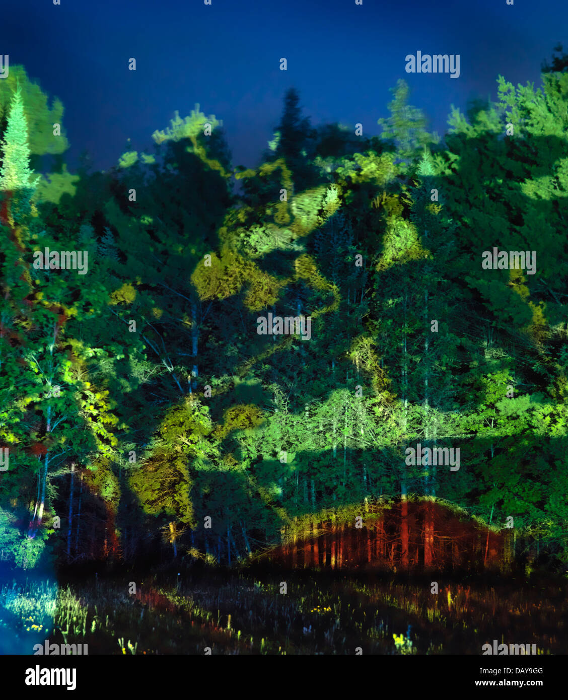 Abstract colorful light projection on green trees, beautiful abstract night nature scenery - Stock Image