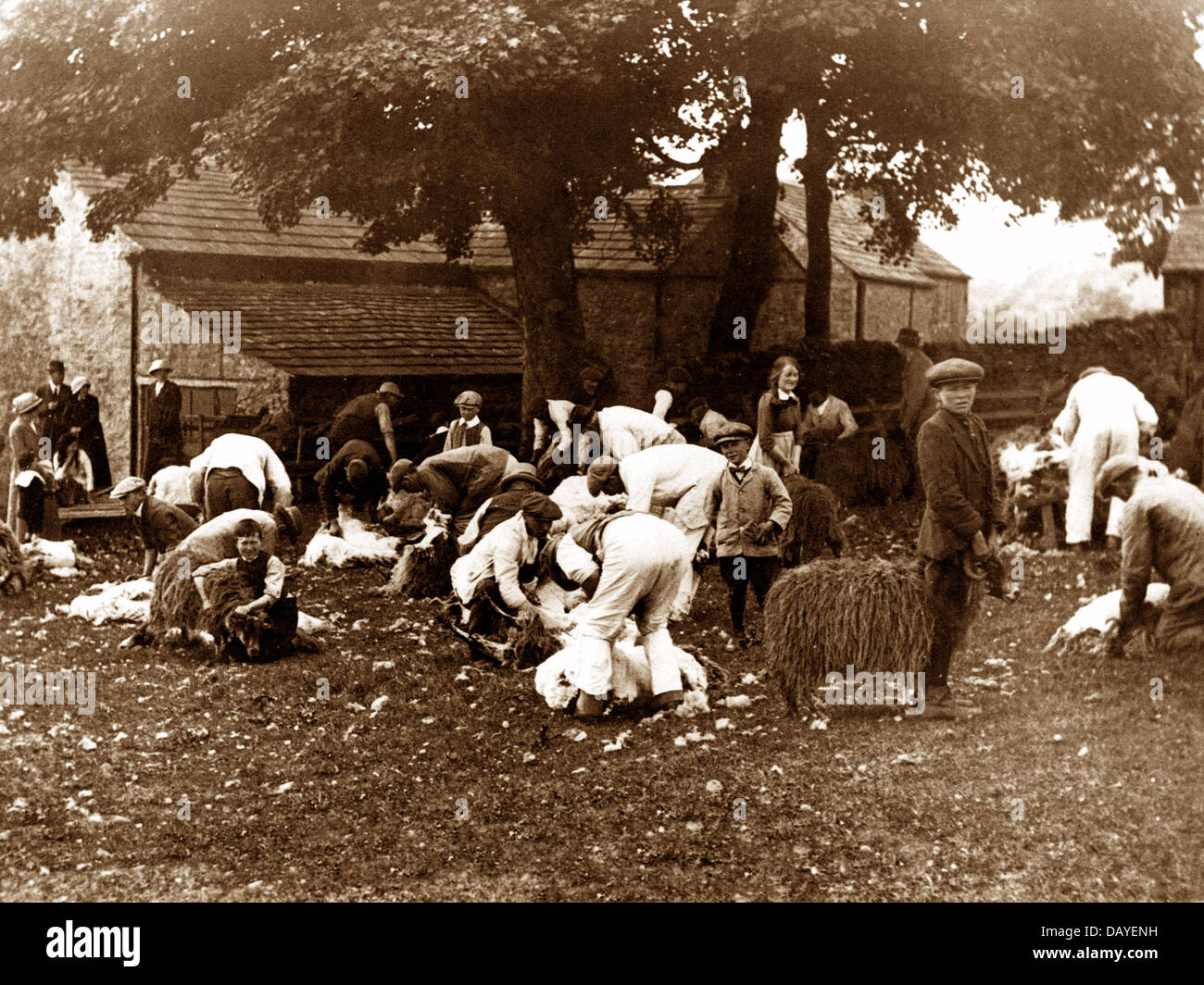 Stanhope Sheep Clipping in 1914 - Stock Image