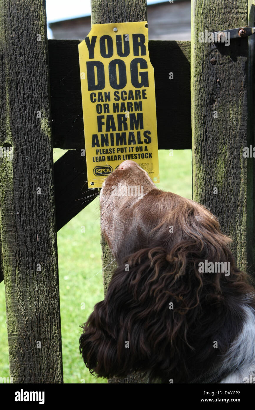 Dog looking at sign warning of the risk of dogs harming farm animals - Stock Image