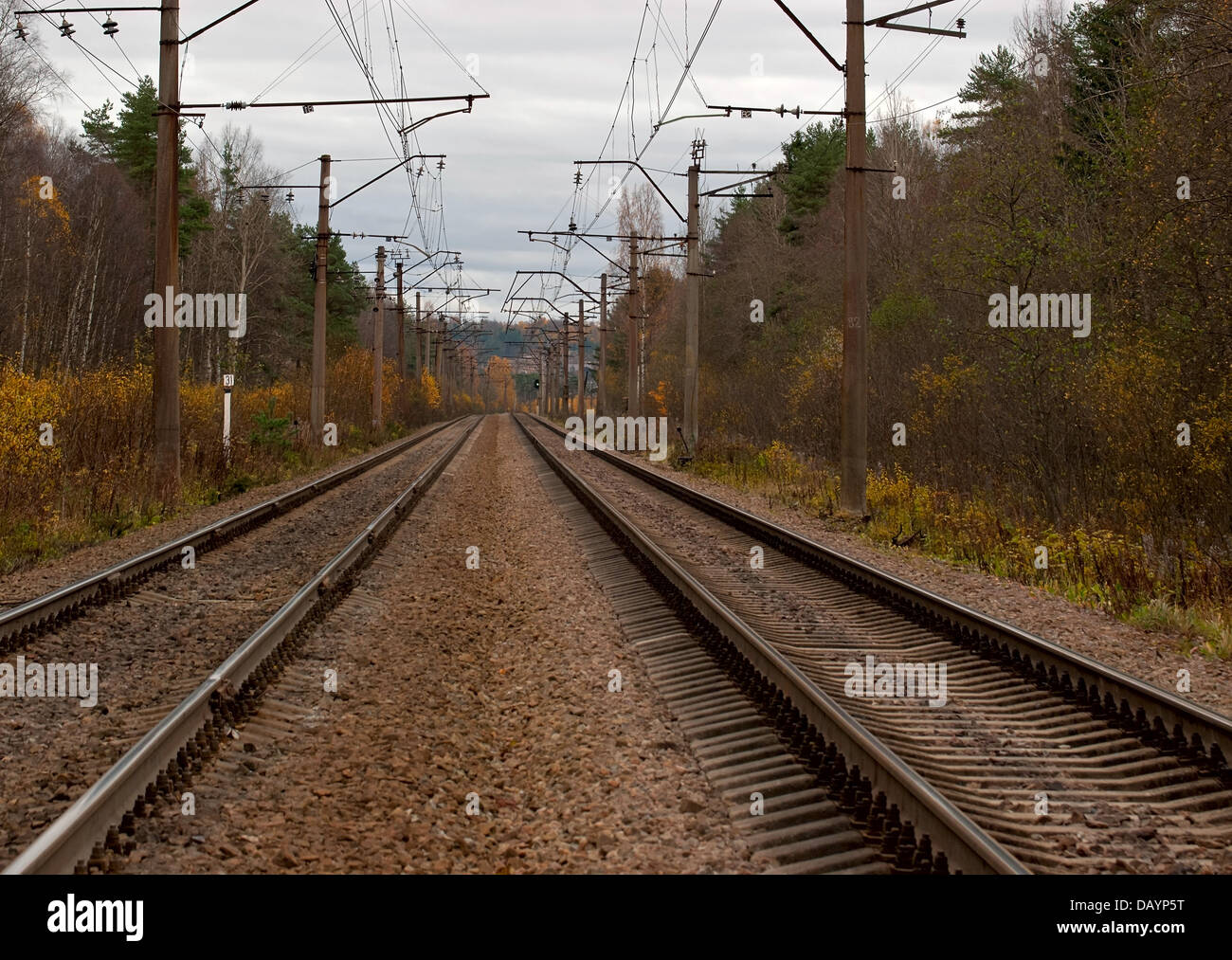 Rails of the railroad in the autumn forest. - Stock Image