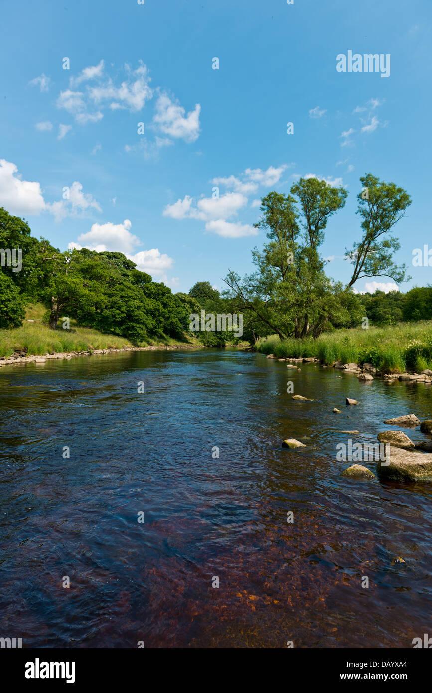 Mid summers day at the Strid near Bolton Abbey, Wharfedale, Yorkshire England, UK, Europe. - Stock Image