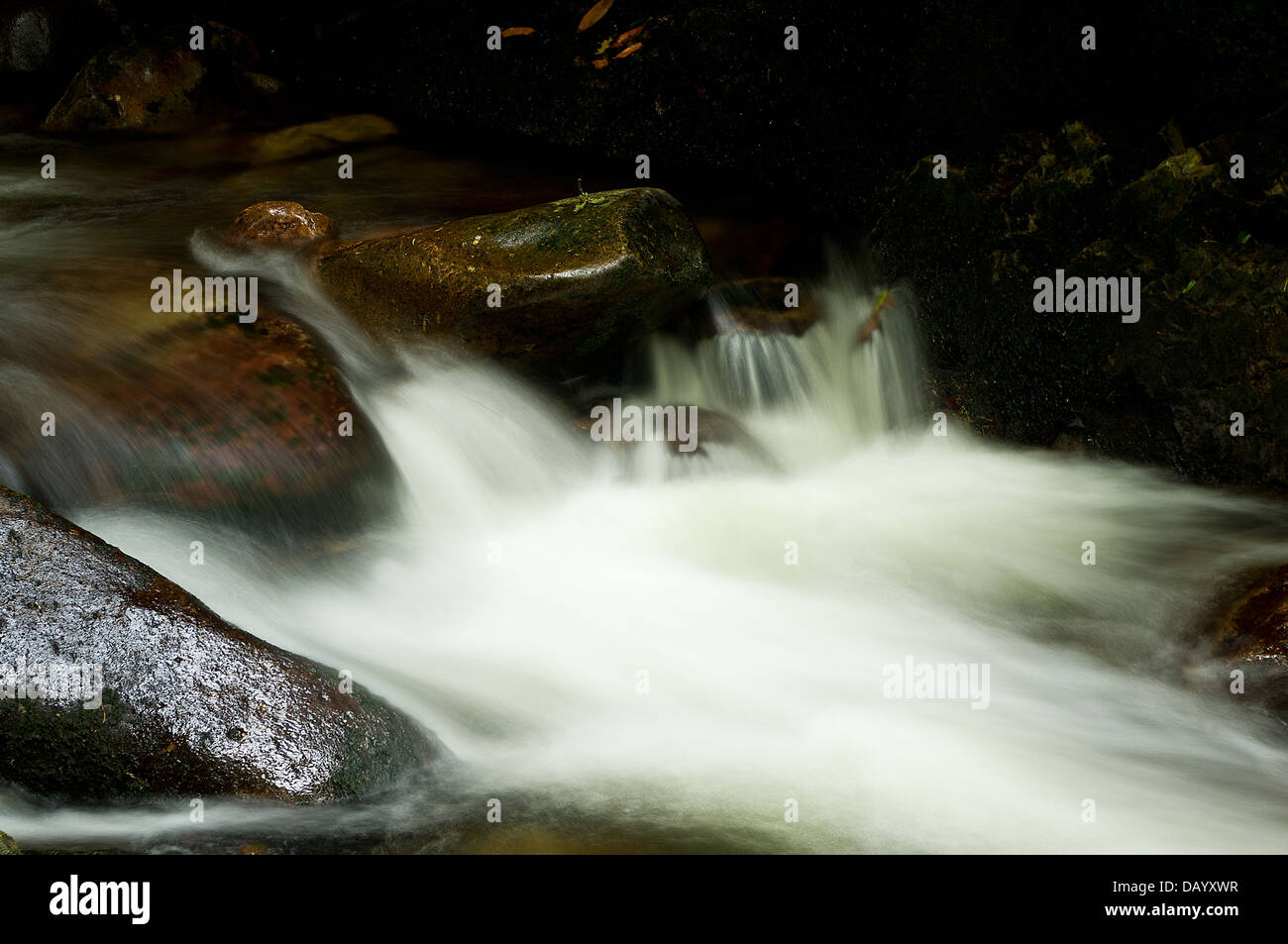 The swift waters of the River Erme, in a moment of evening 'chiaroscuro'. In the Longtimber Woods, Dartmoor National - Stock Image