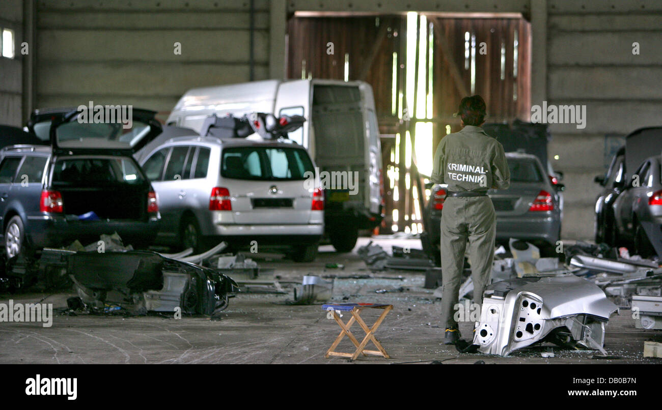 A crime scene investigator is pictured surrounded by stolen cars, some of which are half taken apart, at a warehouse - Stock Image