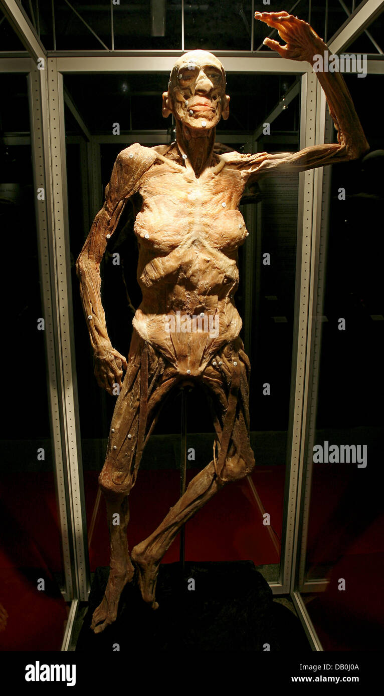 The Prepared Body Of A Man Pictured At The Exhibition Real Bodies