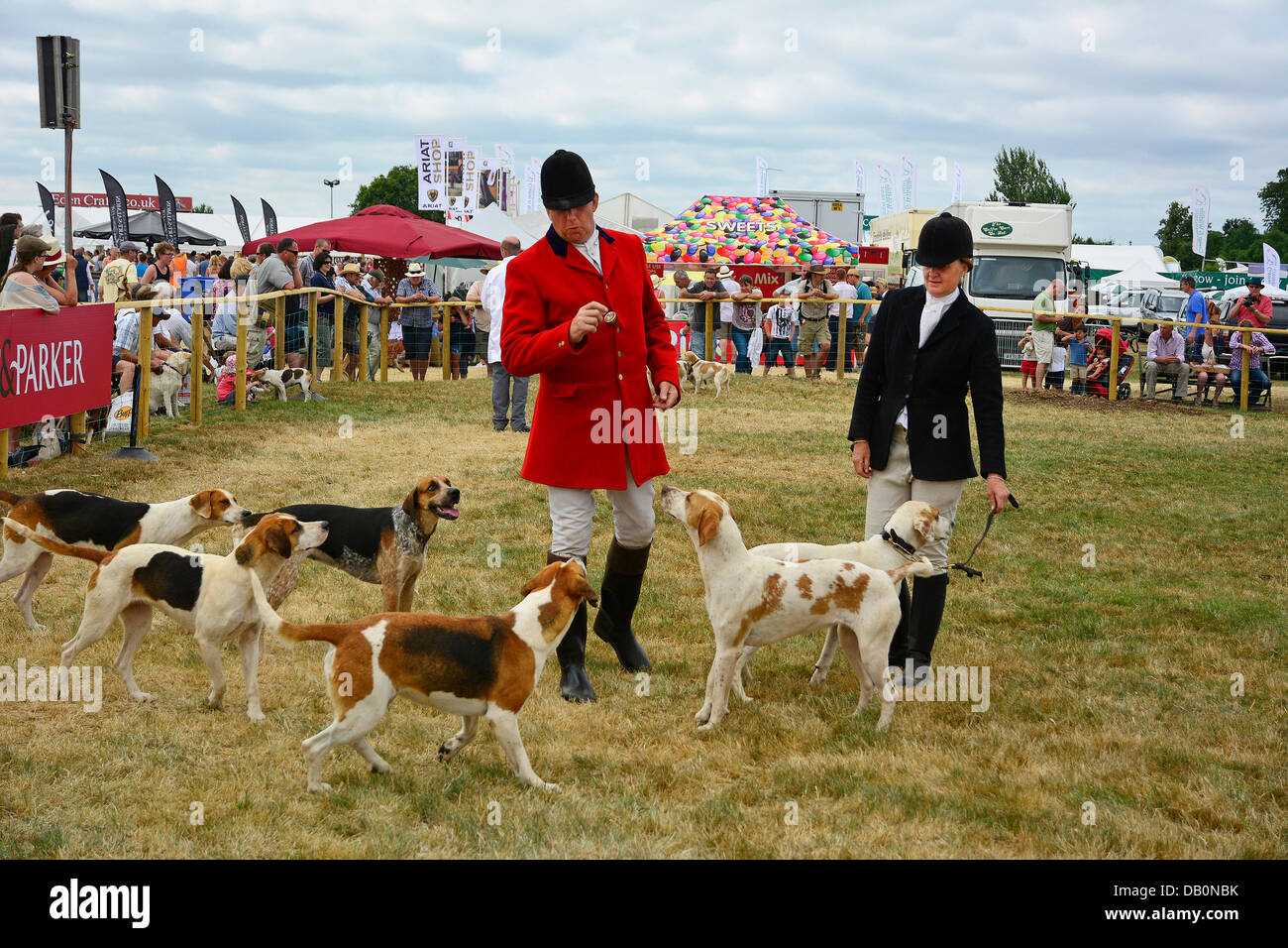 Alcester, Warwickshire. 21st July, 2013. Hounds in the ring at at the CLA Game Fair, Ragley Hall, Alcester, Warwickshire, Stock Photo