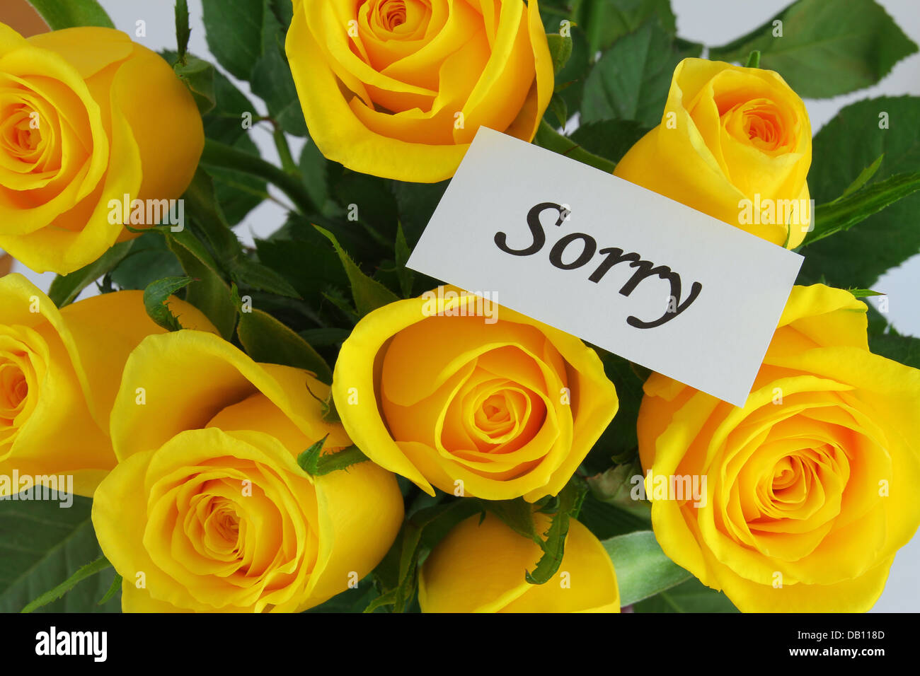 Sorry Card With Yellow Roses Stock Photos Sorry Card With Yellow