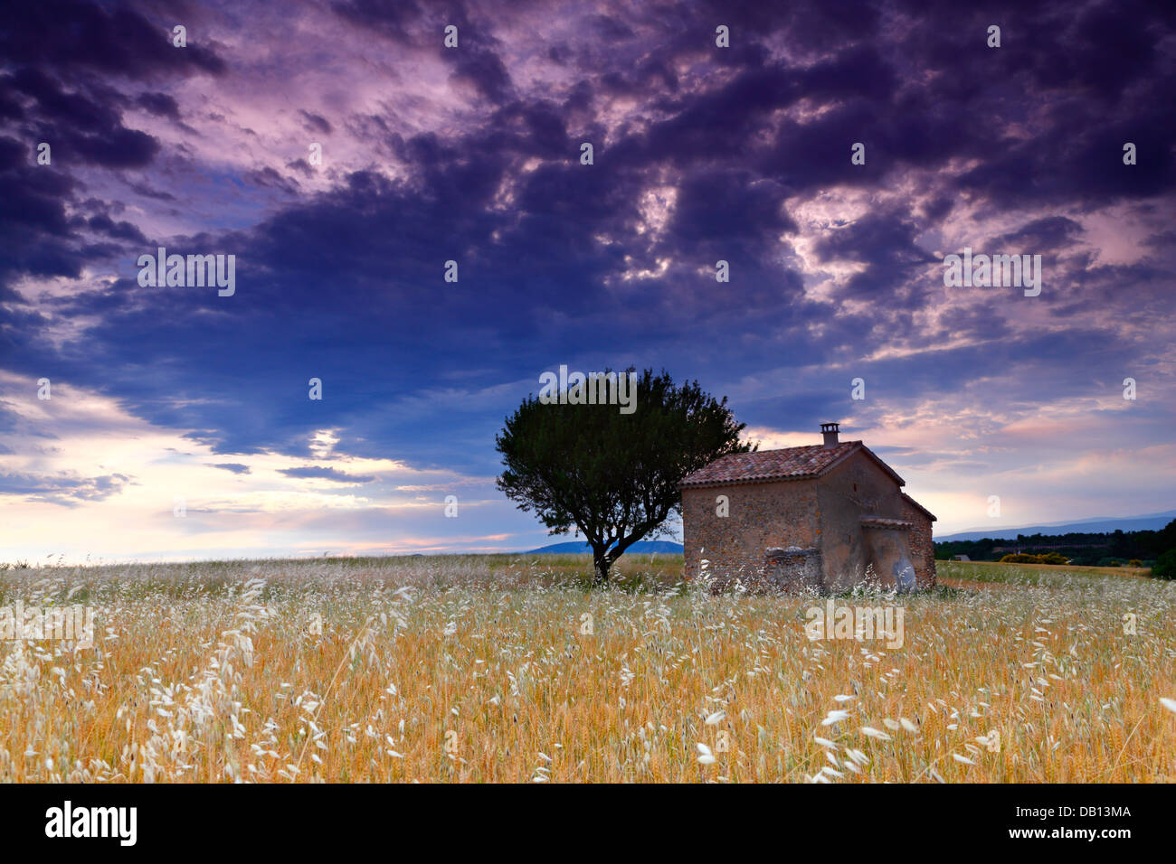 A house in a wheat field, France - Stock Image