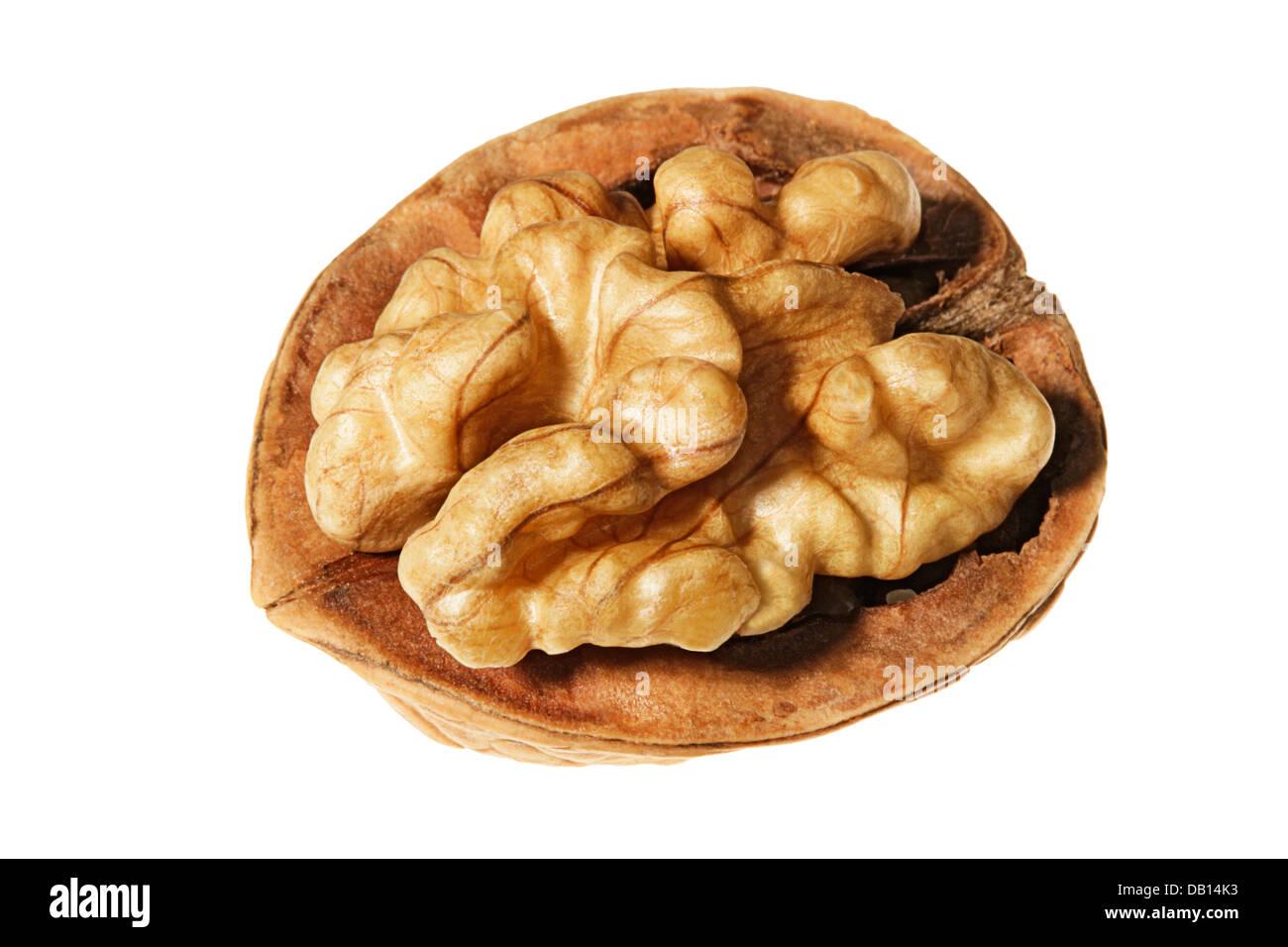 Walnut core - Stock Image