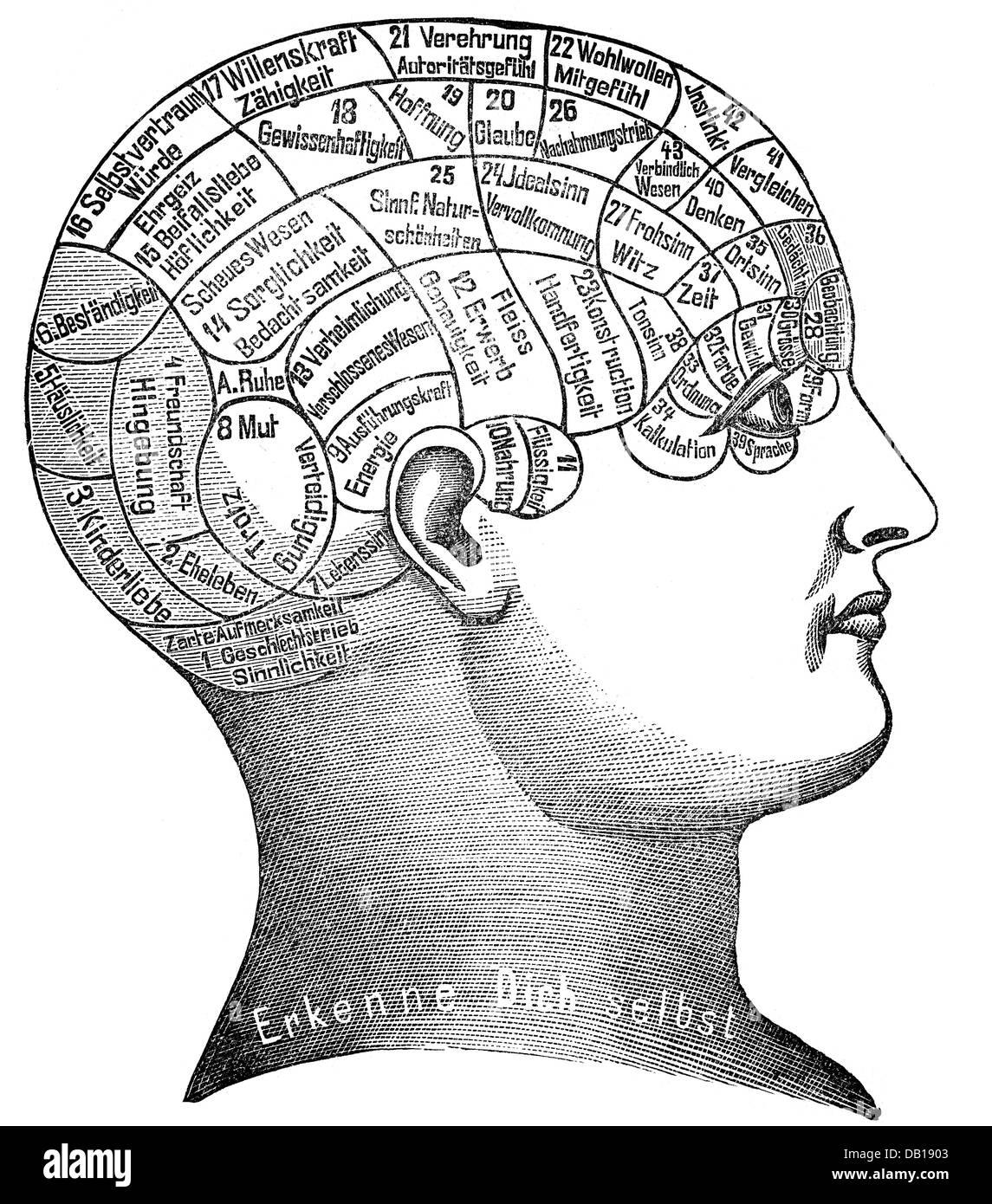 medicine, anatomy, brain / skull, depiction of the human character ...