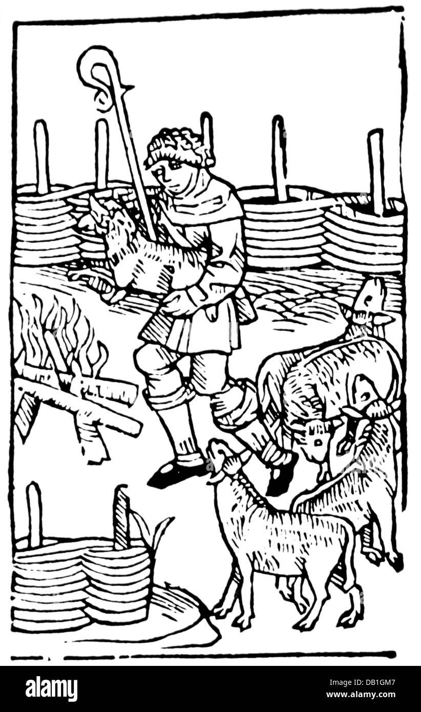 agriculture, stock farming, sheep, shepherd at work, woodcut