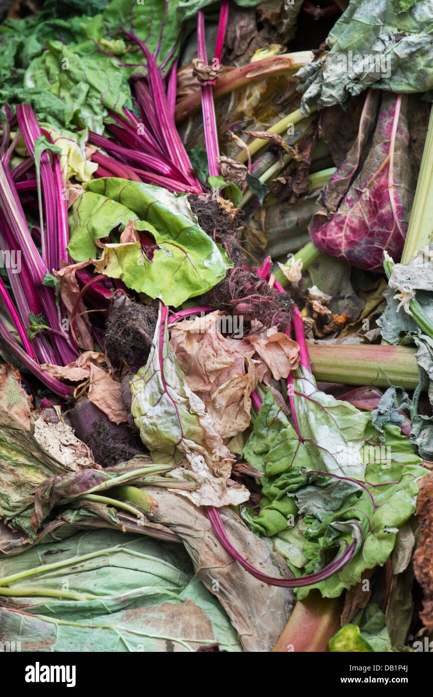 Vegetable plant waste. Garden waste on the compost heap - Stock Image