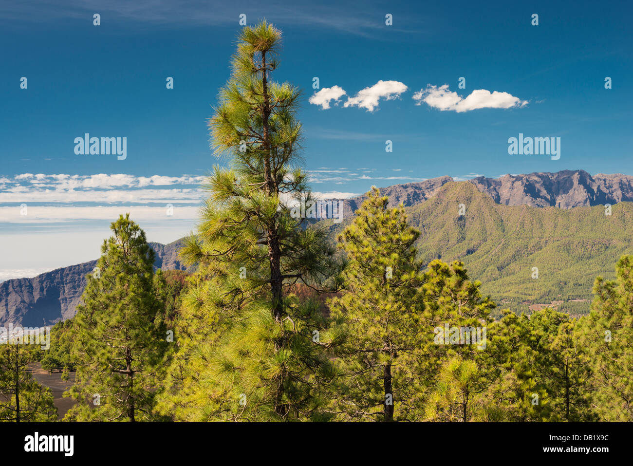 View northwards from Llano de Jable towards Pico Bejenado and Caldera de Taburiente, La Palma, Canary Islands - Stock Image