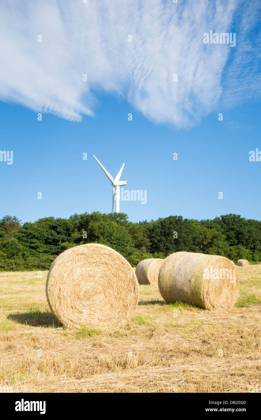 Round hay bails in field in County Durham, England, UK - Stock Image