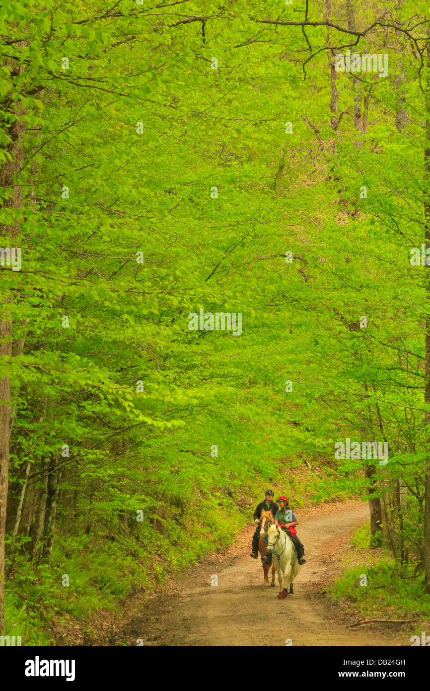 Horseback Riding, Bradley Fork Trail, Great Smoky Mountains