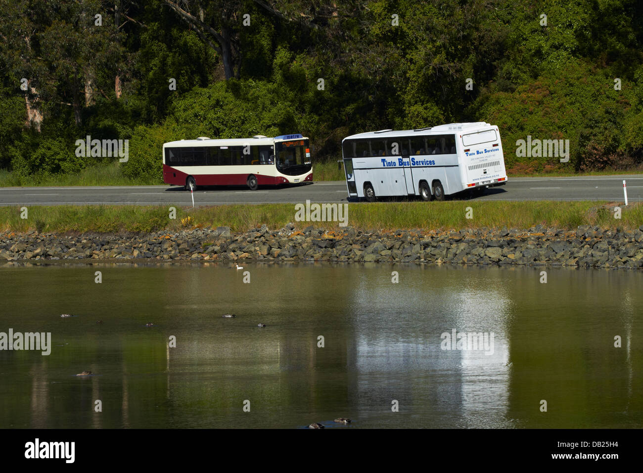 Buses beside Otago Harbour near Port Chalmers, Dunedin, Otago, South Island, New Zealand - Stock Image