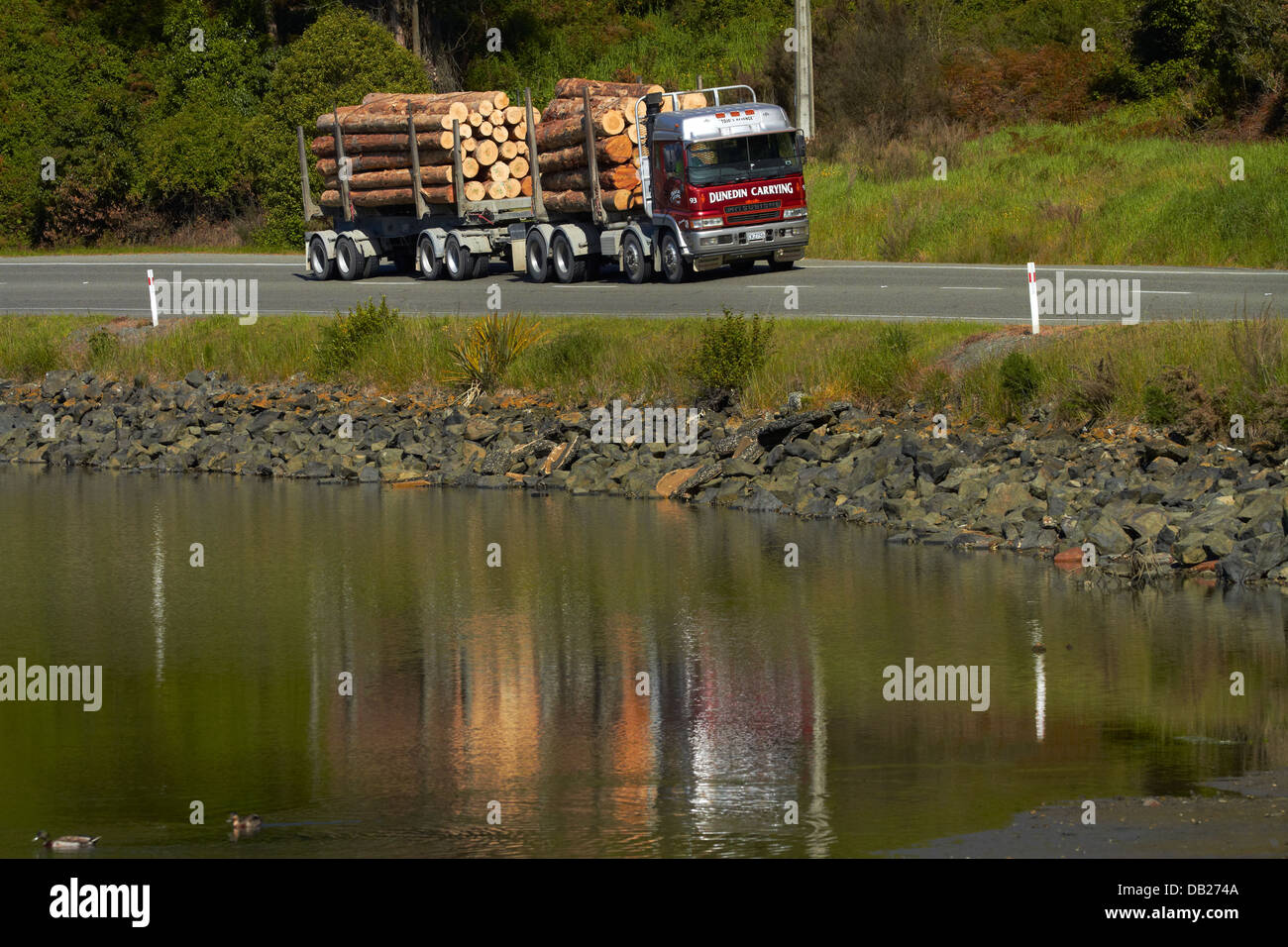 Logging truck with export logs near Port Chalmers, Dunedin, Otago, South Island, New Zealand - Stock Image