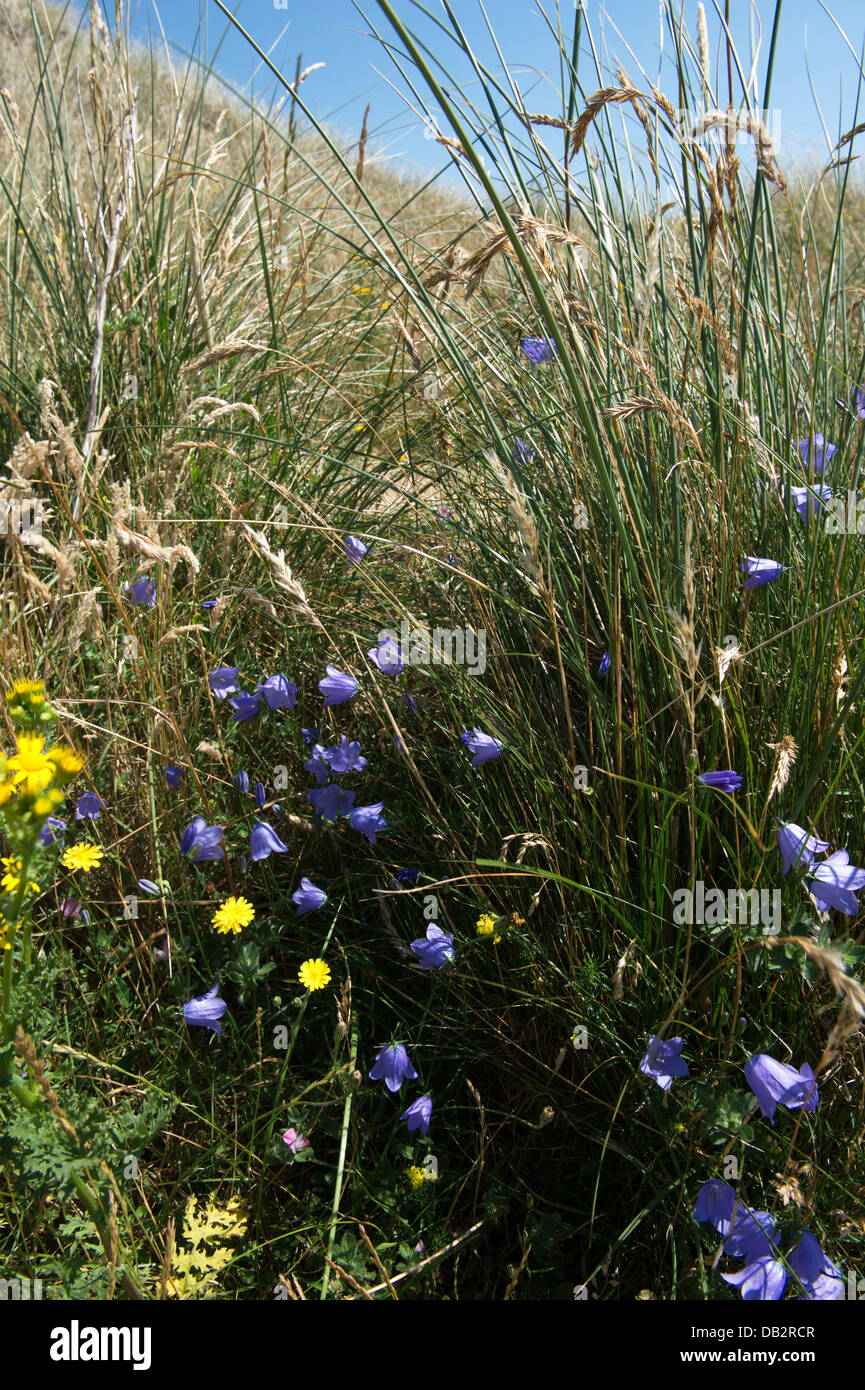 Yellow And Blue Wild Flowers Amongst Grasses In Grey Secondary