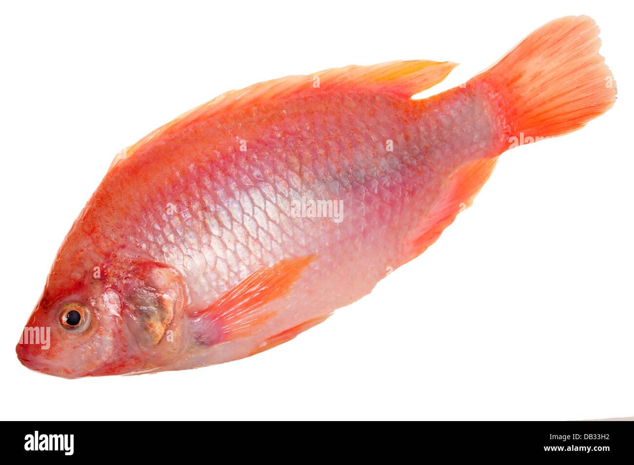 Tilapia Fish Stock Photos & Tilapia Fish Stock Images - Alamy